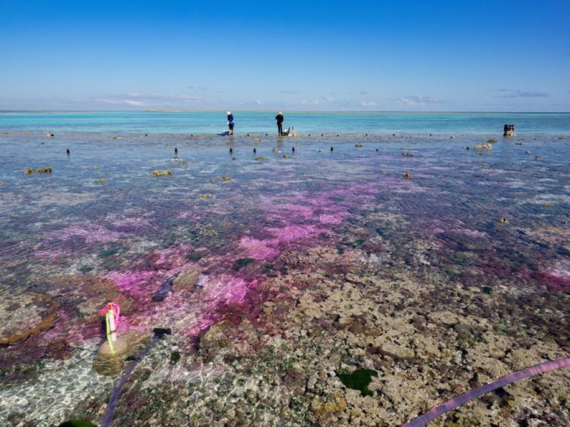Great Barrier Reef Exposed to More CO₂; Results Are Grim